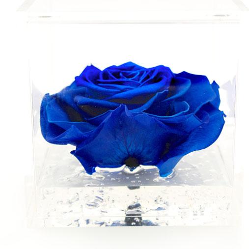 Rosa stabilizzata blu flowercube