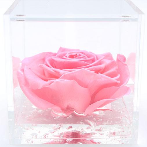 Rosa stabilizzata rosa flowercube