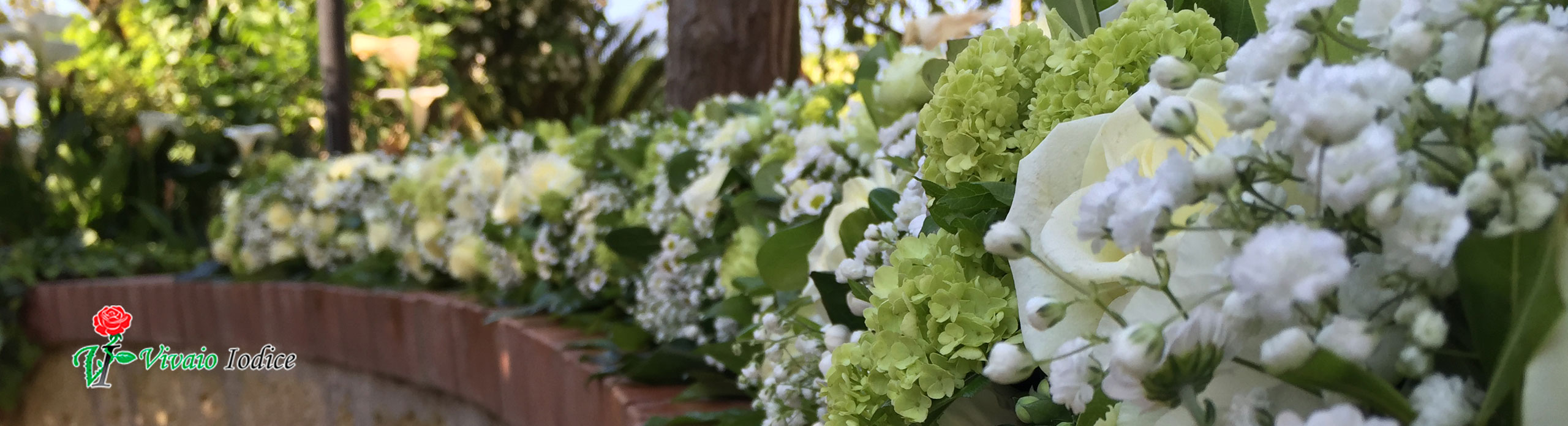 Siepi Miste Da Giardino piante da esterno | vivaio iodice matrimoni ed eventi