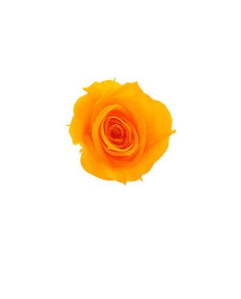 Rosa stabilizzata flowercube arancio