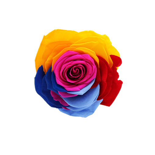 Rosa stabilizzata flowercube arcobaleno