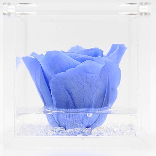 Rosa stabilizzata flowercube azzurro