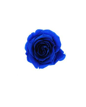 Rosa stabilizzata flowercube blu