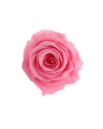 Rosa stabilizzata flowercube rosa