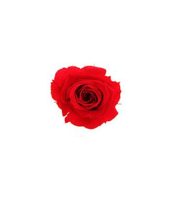 Rosa stabilizzata flowercube rosso