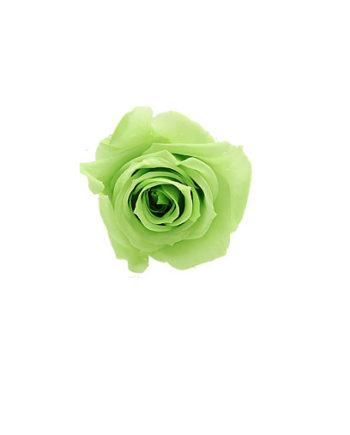 Rosa stabilizzata flowercube verde