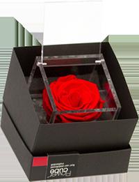 vivaio Napoli Flowercube rosa