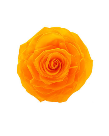 Rosa stabilizzata arancione flowercube