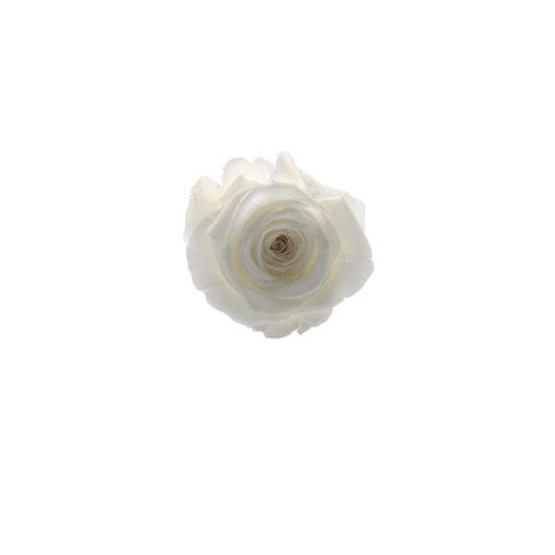 Rosa stabilizzata bianca flowercube