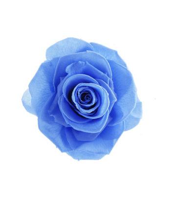 Rosa stabilizzata celeste flowercube
