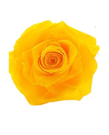 Rosa stabilizzata gialla flowercube
