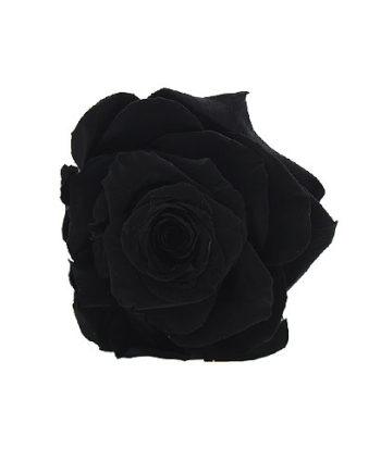 Rosa stabilizzata nera flowercube