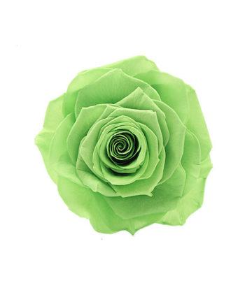 Rosa stabilizzata verde flowercube