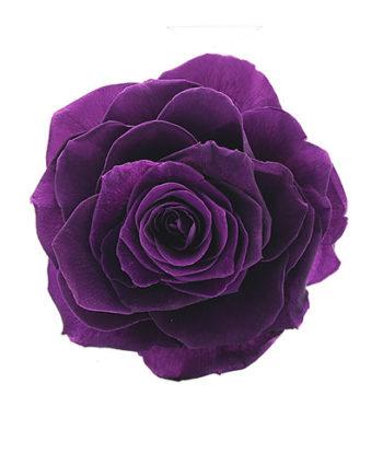 Rosa stabilizzata viola flowercube