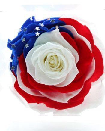 Rosa Stabilizzata American Edition