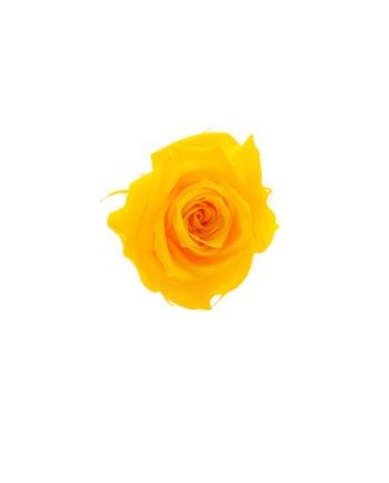 Rosa stabilizzata flowercube gialla
