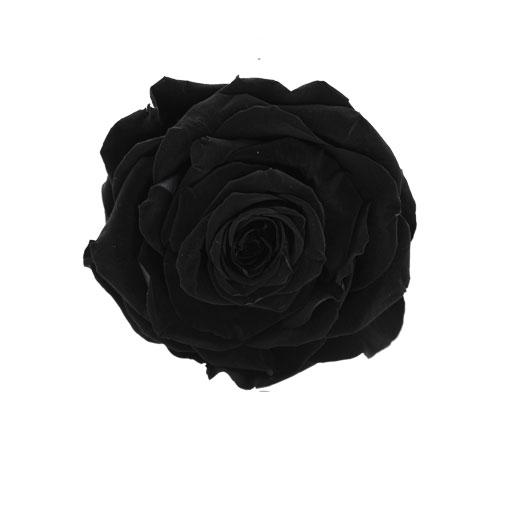 Rosa stabilizzata flowercube nero