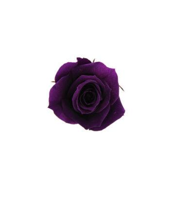 Rosa stabilizzata flowercube viola