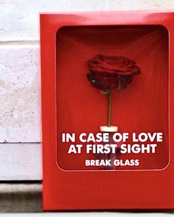Rosa stabilizzata Love