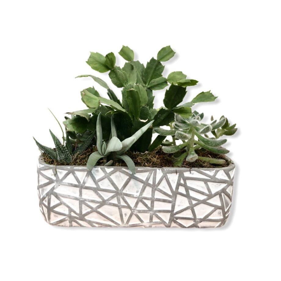 Composizione piante grasse cemento