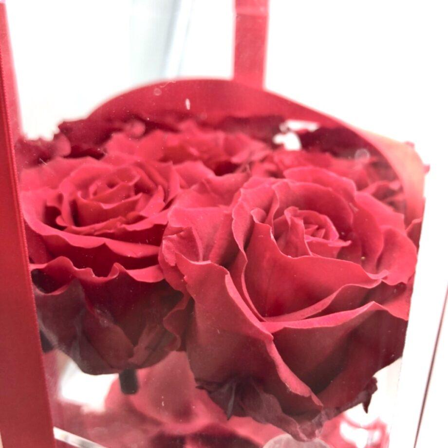Box Plexiglas 9 rose